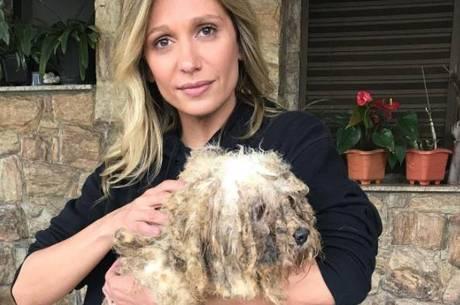 """Luisa Mell choca com resgate de 135 cães: """"Pior coisa que eu já vi"""""""