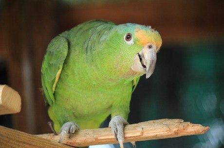STJ reconhece direitos e dignidade de papagaio em decisão judicial