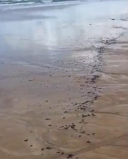 Manchas de óleo voltaram a aparecer em seis praias do RN nesse fim de semana