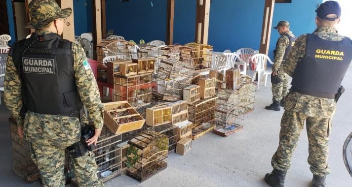 Operação da Guarda Municipal resgata 214 pássaros silvestres em feira livre de Natal
