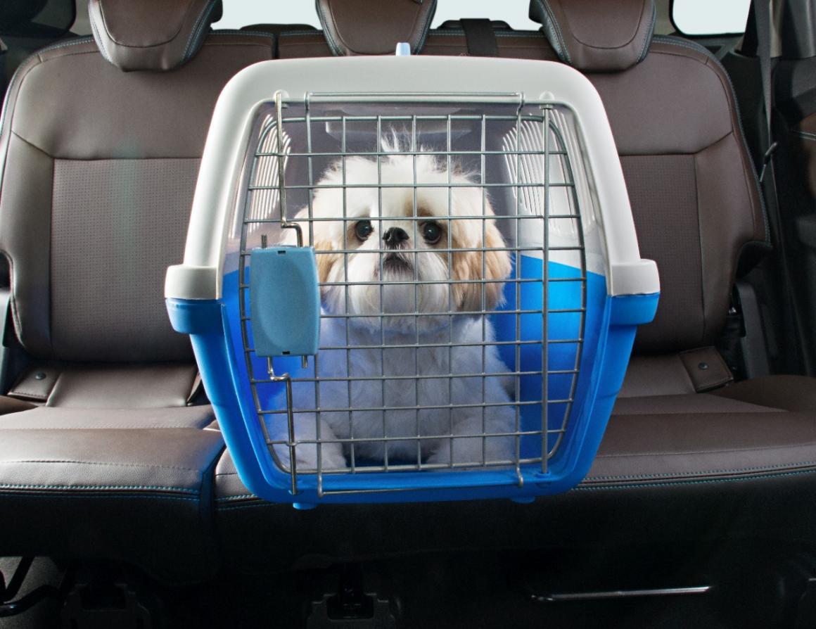 Publicada lei que autoriza transporte de cachorros e gatos em ônibus e trens no RN