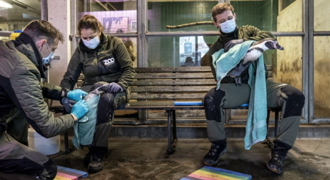 H5N8, variação da gripe aviária, tem potencial para se tornar nova pandemia, alertam cientistas