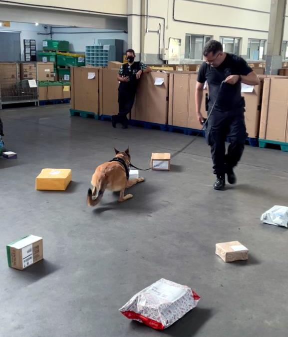 IMG-20210928-WA0015 FOTOS – INTERCEPTAÇÃO VIA CORREIOS: Cães da PF encontram 100 comprimidos de ecstasy ocultos em par de tênis em encomenda postal em Natal