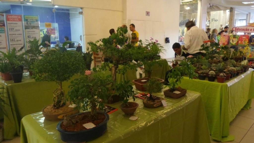 299bdac8130 Feira de flores e plantas no Shopping Cidade Jardim